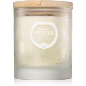 Maison Berger Paris Aroma Love vonná svíčka Voracious Flower 180 g
