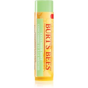 Burt's Bees Lip Care balzám na rty (with Cucumber & Mint) 4,25 g
